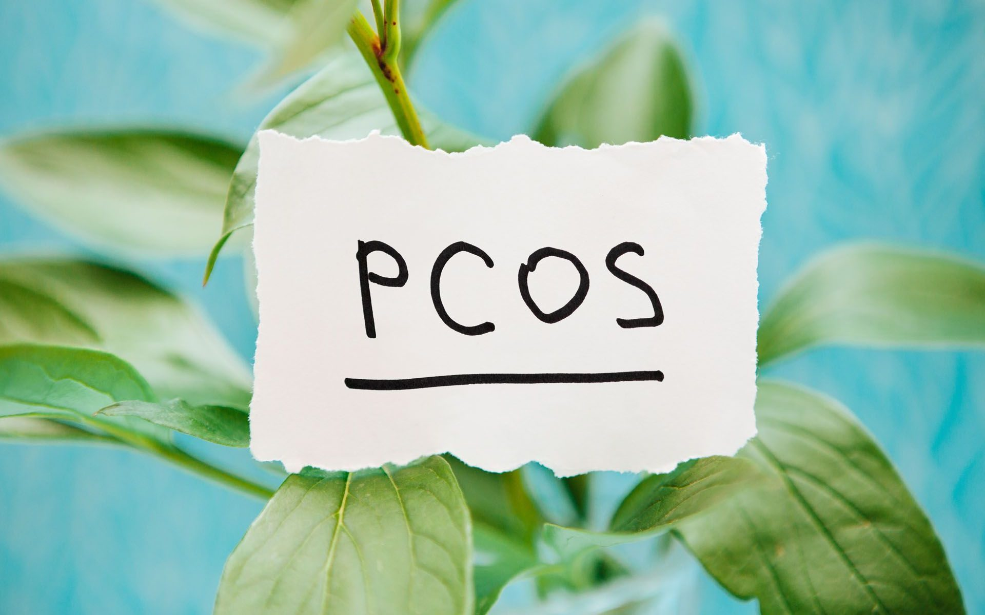 pcos awareness month fertility acupuncture reading